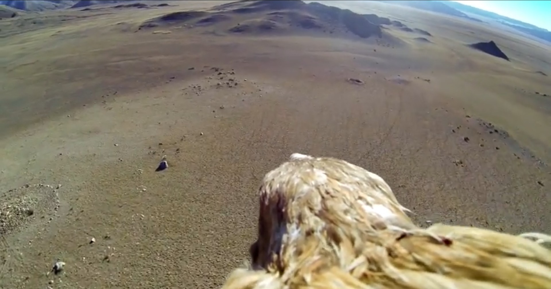 fly like an eagle camera go pro mongolia travel