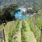 View over Monterosso al Mare and winefields