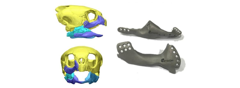 3d print jaw turtle
